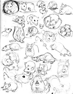 To practice drawing rats I have been sketching as many pictures of them as I can find. Pen and ink in my drawing book. *if I have drawn a picture of your rat please understand I am just trying to i...