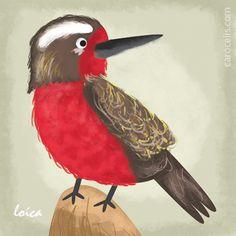 Ilustrared - @caro_celis - Ilustrared - Loica: Pajaros chilenos Animals, Romantic Paintings, Bicycle Kick, Cute Stuff, Birds, Illustrations, Drawings, Animales, Animaux