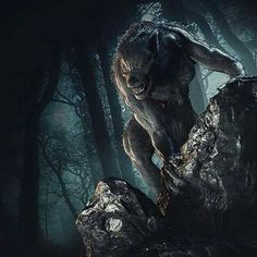 Werewolf Games, Werewolf Art, Werewolf Vs Vampire, Of Wolf And Man, Howl At The Moon, Famous Monsters, Classic Monsters, Wolf Howling, Mythical Creatures