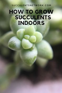 Ultimate guide to grow succulents indoors. Learn where to place for the best light and Drought Resistant Plants, Lower Lights, Succulent Care, Christmas Cactus, Container Gardening, Indoor Plants, Succulents, Inside Plants, Succulent Plants