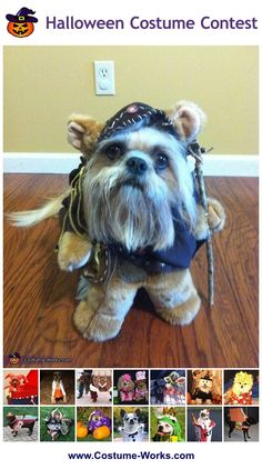 Ewok - tons of Halloween costume ideas for pets! Ewok Halloween, Great Halloween Costumes, Diy Dog Costumes, Halloween Costume Contest, Creative Costumes, Homemade Costumes, Costume Ideas, Halloween Shops, Homemade Halloween