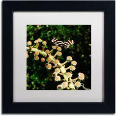 Trademark Fine Art Zebra Longwing Butterfly Canvas Art by Kurt Shaffer, White Matte, Black Frame, Size: 16 x 16, Multicolor