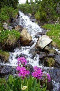 L'effet cascade fleurie