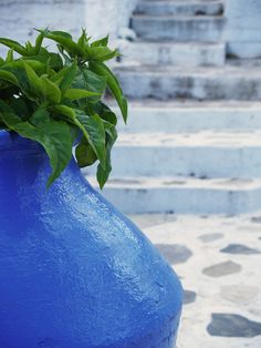 Greece, fresh basil!