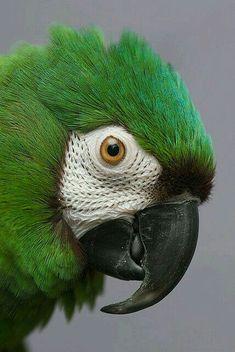 Our bird, Gandy Green