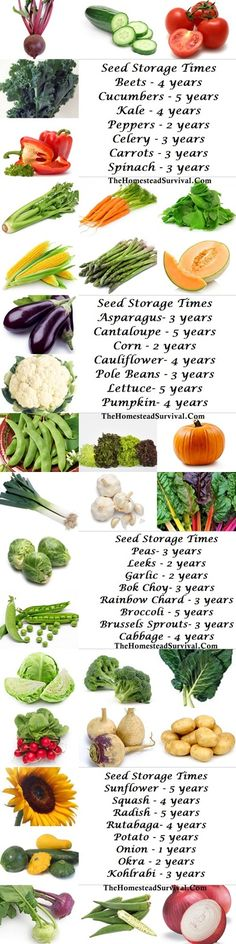 Seed Storage Times and Viability  Saving garden (Vegetable & Fruit ) seeds » The Homestead Survival