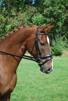Red Barn Capriole Monocrown Dressage Bridle, also available in Weymouth