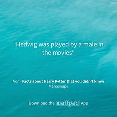 """I'm reading """"Facts about Harry Potter that you didn't know"""" on #Wattpad. http://w.tt/1x3KTry #shortstory #quote"""