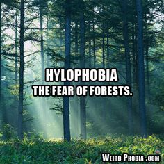 Hylophobia - The fear of forests.
