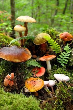 Mushrooms & moss ~ what a gorgeous scene..so many mushrooms in one little area!