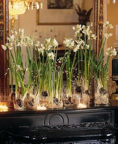 An elegant mantlepiece arrangement of flowering bulb plants in a variety of glass vases, highlighted with tea candles.