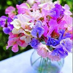 Sweet Sweet Peas !!  My other favorite flower; we use the garden area to grow a big crop every year - can't wait!