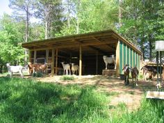 Simple Goat barn. Could double as hog barn. two of these out in the fields...