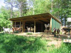 Simple Goat barn