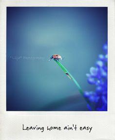 #2, Les Hirondelles Photography