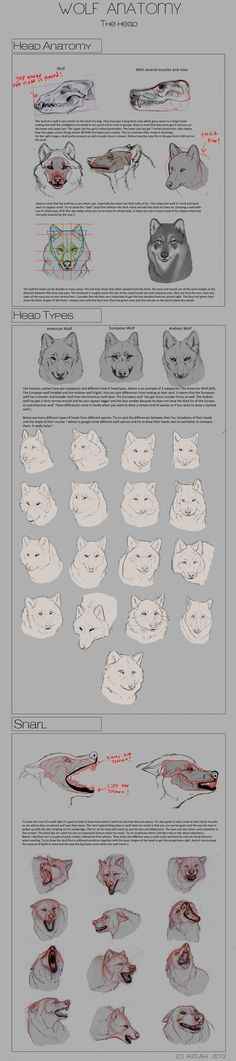 Wolf Anatomy - Part 3 by *Autlaw on deviantART