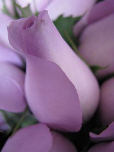 Lilac is the color your Guardian Angel uses to let you know they are with you.