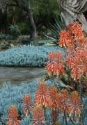 The Desert Garden: Gary Lyons San Clemente, CA #Kids #Events