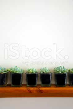 Succulent Plants on Shelf Background royalty-free stock photo Succulent Plants, Planting Succulents, Hens And Chicks, Plant Shelves, Image Now, Planter Pots, Shelf, Wedding Invitations, Royalty Free Stock Photos