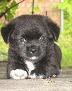 puppie !!!!