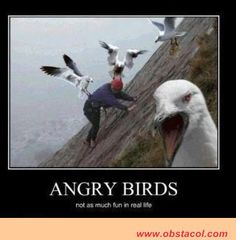 QUOTES ABOUT BIRDS | real life quotes true story quotes tumblr funny angry bird quotes ...