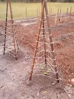 DIY trellis for cucumbers, squash