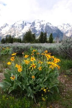Grand Teton National Park #FindYourPark