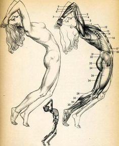 Enjoy a collection of references for Character Design: Female Anatomy. The collection contains illustrations, sketches, model sheets and tutorials. Anatomy Sketches, Anatomy Drawing, Anatomy Art, Anatomy Poses, Drawing Lessons, Drawing Techniques, Life Drawing, Figure Drawing, Body Anatomy