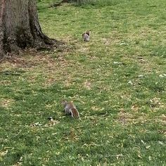 When we heal the earth we heal ourselves ~ David Orr. . . Today on the blog I shared 5 more simple things you can do to save the planet an your money. This part 9 of my little series if you want to check it out. Link in bio⬆️ . . How cute are these little squirrels?🐿 . . #hashtagr #earth #discover #ecofriendly #savetheplanet #discoverunder5k #discoverunder10k #discoverunder1k #squirrels #squirrelsofinstagram #ecofriendlyproducts #ecofriendlyliving #squirrelsofig #ilovesquirrels tags by… Save The Planet, Simple Things, Squirrels, David, Earth, Money, Tags, Link, Check
