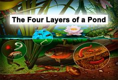 4 layers of pond
