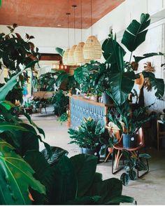 Plants, counter, lights