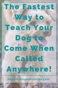 Dog Hand Signals, New Environment, Dog Behavior, Dog Training Tips, New Puppy, New Tricks, Dog Food, Dog Owners, Best Dogs