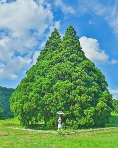 Totoro Tree in summer, Sakekawa village, Yamagata Beautiful Sites, Beautiful Places To Visit, Beautiful Gardens, Japanese Landscape, Green Landscape, Japanese Countryside, Secret World Of Arrietty, Moon Photography, Nature Plants