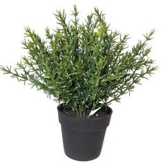 18cm-Artificial-Potted-Thyme-Plant-Decorative-Plastic-Herb-Plant