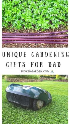 Find garden gift ideas just in time to spoil your loved one. Read our post to learn about these 5 unique gardening gifts for dad. Low Maintenance Garden Design, Landscape Maintenance, Garden Crafts, Garden Tools, Garden Tool Organization, Garden Care, Garden Beds, Garden Landscape Design, Natural Garden