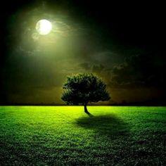 Luna bosque