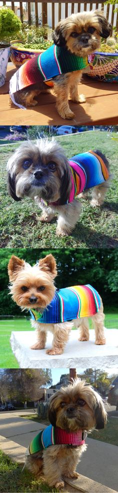 Dog clothes as unique as your dog.Baja Ponchos are beautifully hand-sewn from hand-woven serape blankets straight from Tlaxcala, Mexico. Cute Puppies, Cute Dogs, Dogs And Puppies, Doggies, Baby Animals, Cute Animals, Yorky, Dog Grooming, Mans Best Friend