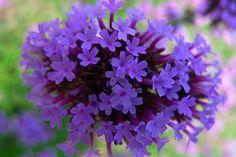 Purple Flower 13x19 In. Print $20.00