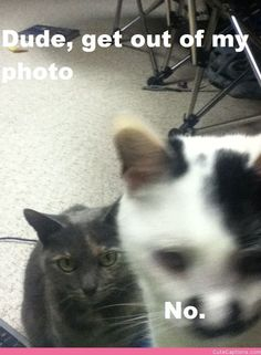 Photobombing Kitten | Cute Captions More at - Catsincare.com