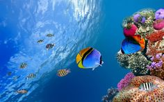 Image from http://4hdwallpapers.com/wp-content/uploads/2013/04/Corals-And-Fishes.jpg.
