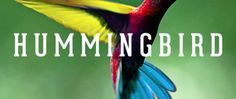 How Hummingbird changes the SEO world Seo Training, Hummingbird, Cool Words, Infographic, Chennai, Blog, Google, Infographics, Hummingbirds