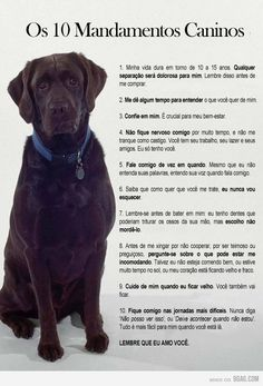 Para nós que amamos nossos animais de estimação!