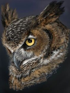 One of my personal touchstones in the animal kingdom - the Great Horned Owl. PhotoShop and about 4 hours of spare time. Owl Bird, Bird Art, Pet Birds, Photo Ours, Photo Animaliere, Owl Photos, Owl Pictures, Owl Eyes, Great Horned Owl