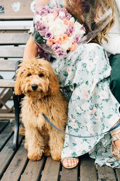 8 Best Goldendoodle grooming images | Goldendoodle grooming