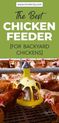 This way, your chickens are assured of clean and dry pellets/grains/scratch. You can also save tons of money on chicken feed spoilt by predators, spillage, rainwater, and mold by using the best chicken feeders. Let's find out some best chicken feeders that you can buy. . . . #ChookCity #Chicken #RaiseChickens #BackyardChickens #UrbanGarden #UrbanHomestead #Homestead #ChickenFeeder Backyard Coop, Chickens Backyard, How To Deter Mice, Automatic Chicken Feeder, Chicken Facts, Chicken Feeders, Easy Animals, Yard Care, Facts For Kids