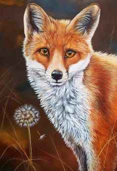 Fox Fine Art Print by British Wildlife Artist Helen Clark. Signed and Limited to 500 Wildlife Paintings, Wildlife Art, Animal Paintings, Animal Drawings, Horse Drawings, Fuchs Baby, Fox Painting, Fox Drawing, Fox Pictures