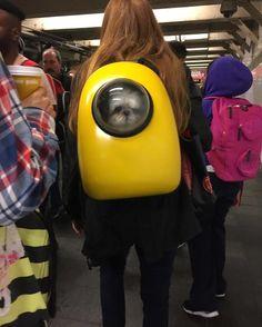 Pup's Got A Yellow Submarine