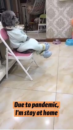 Cute Funny Dogs, Cute Funny Animals, Cute Baby Animals, Cute Cats, Animals And Pets, Cute Animal Videos, Funny Animal Pictures, Cute Dogs And Puppies, Black Lab Puppies