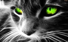 Black cat desktop hd wallpaper