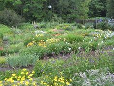Perennial Flower Identification | lower garden in July